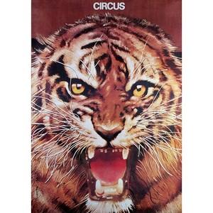 Circus - Lion